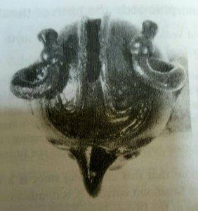 fogsdarpbirdseye
